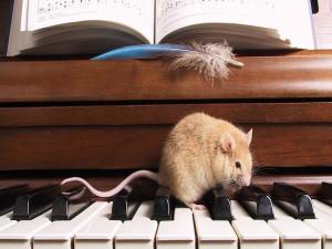 Rata sobre las teclas del piano