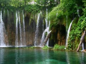 Impresionantes cascadas entre los árboles