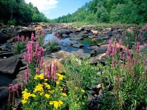 Flores y piedras junto al cauce de un río