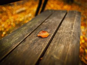 Hoja sobre un banco de madera