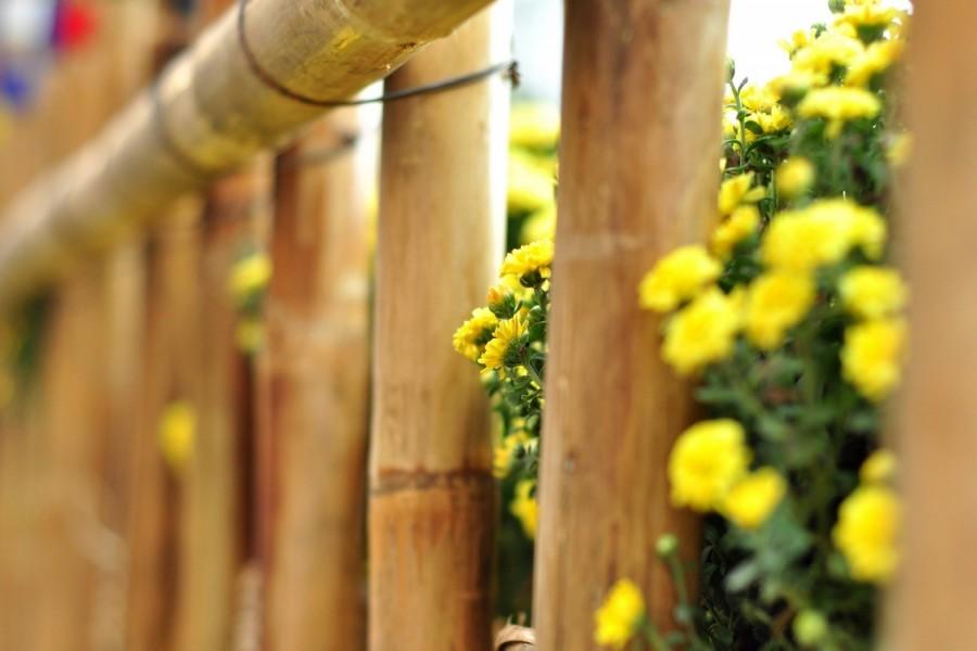 Flores amarillas junto a una valla de bambú