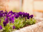 Lindas flores en una jardinera