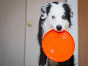 Este perro quiere más comida
