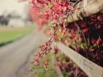 Ramas con flores rosas junto a una valla