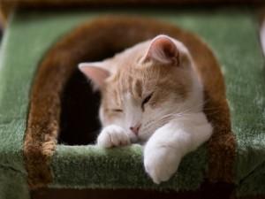Bonito gato adormilado