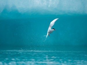 Pájaro volando junto al agua