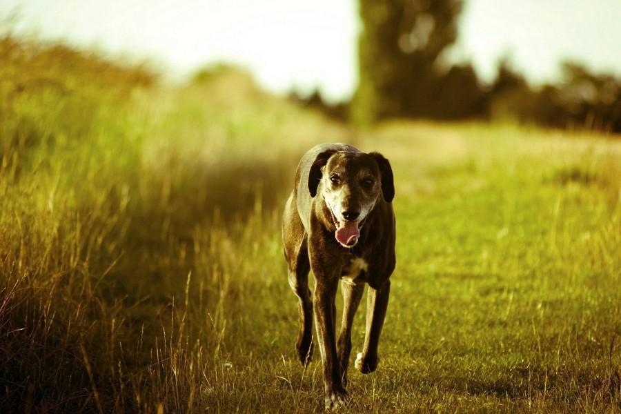 Perro caminando sobre la hierba