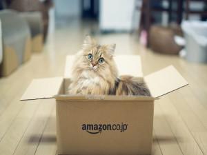 Un hermoso gato dentro de una caja de amazon