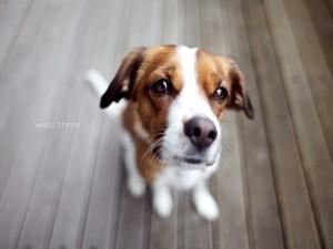 La mirada triste de un perro