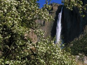 Cascada de Yosemite vista en primavera