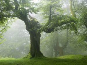 Árboles en un bosque con niebla