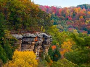 Árboles entre grandes rocas