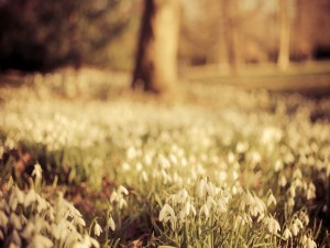 Campanillas en primavera