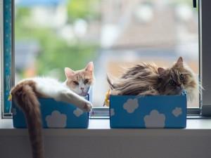 Dos gatos tumbados en unas cajas junto a la ventana