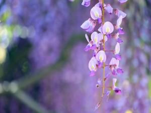 Lindas flores colgando de una rama