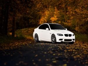 Un BMW M3 en una carretera con hojas otoñales