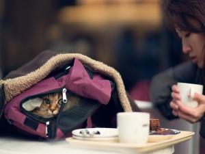 Gato en una mochila
