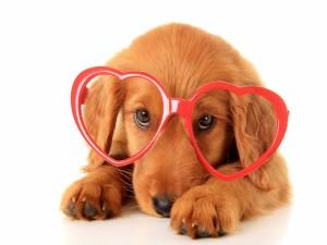 Perro con gafas en forma de corazón