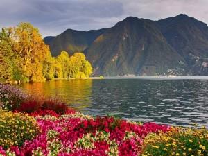 Flores de colores que crecen en un lago de montaña