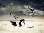 Gaviotas en la arena de una playa