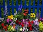 Flores multicolores en el jardín junto a una valla