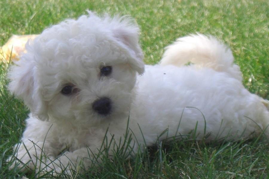 Un lindo perrito sobre la hierba
