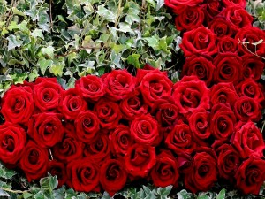 Hiedra y rosas rojas