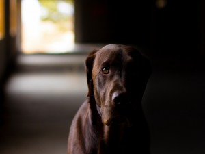 La mirada de un bonito perro
