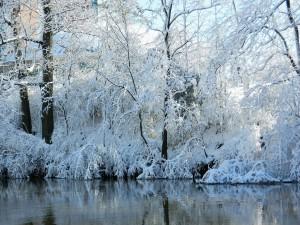 Árboles nevados junto al agua