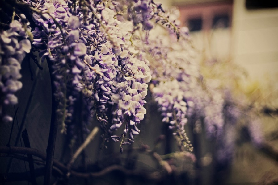 Flores sobre un muro