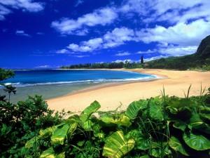 Plantas verdes en la playa Haena (Hawái)