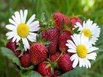 Fresas frescas y margaritas
