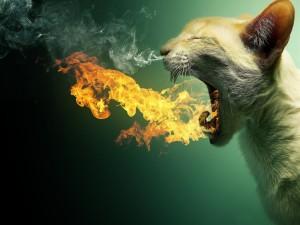 Gato expulsando fuego