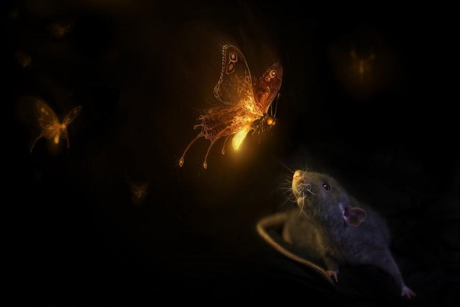 Mariposa observando a un ratón
