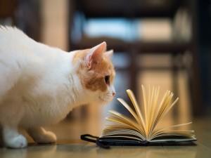 Gato junto a una libreta