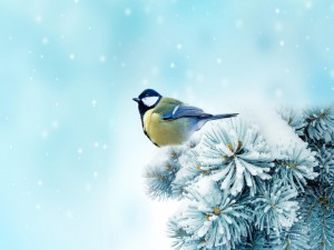 Pájaro sobre unas ramas nevadas