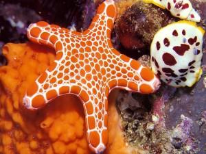 Estrella de mar de color naranja