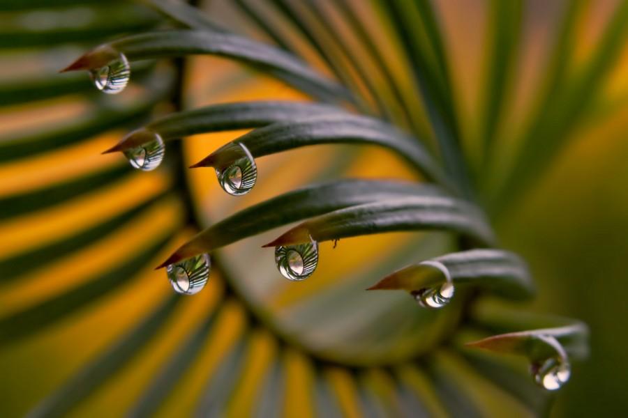 Gotas de agua en las puntas de unas hojas