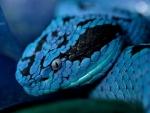 Serpiente de color azul