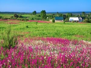 Un prado con flores en un paisaje rural veraniego