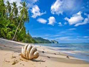 Concha en una playa