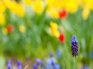 Flor de dos colores en primavera