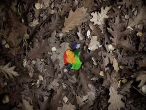 Logo de Apple sobre hojas de otoño