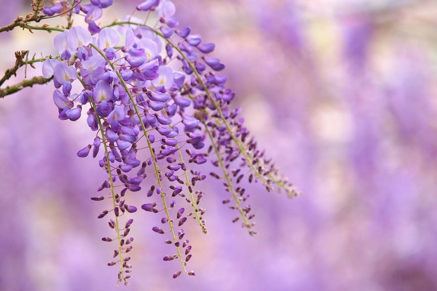 Bonitas flores colgando de las ramas