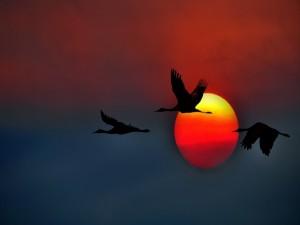 Volando junto al sol