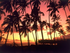 Palmeras en una playa de Hawái