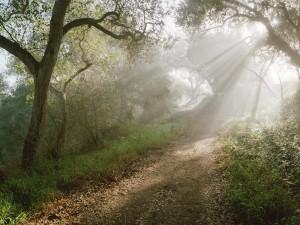 Rayos de sol filtrándose en un bosque