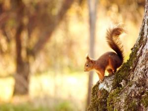 Ardilla sobre el tronco de un árbol