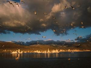 Aves en el lago Mono