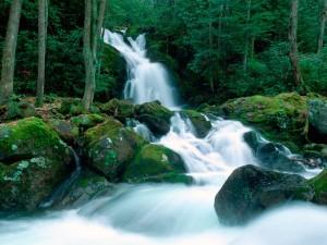 Hermosa cascada en un entorno verde